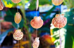 Sea shells souvenirs. Somewhere in Dominican Republic stock photography