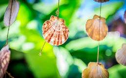 Sea shells souvenirs. Somewhere in Dominican Republic royalty free stock images