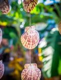 Sea shells souvenirs Stock Photography