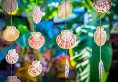 Sea shells souvenirs. Somewhere in Dominican Republic royalty free stock photography