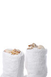 Sea shells on spa towels Royalty Free Stock Images