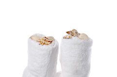 Sea shells on spa towels Royalty Free Stock Photos