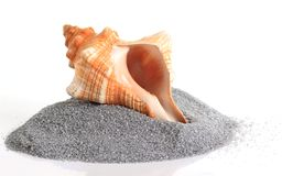Sea shells stacked Royalty Free Stock Images