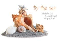 Sea shells stacked Stock Photos