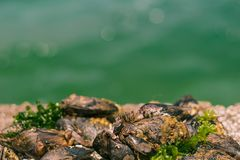 Barnacles and mussels on а rock n royalty free stock photography