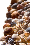 Sea shells and star Stock Photo