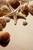 Sea shells and star Stock Photos