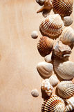 Sea shells and star Royalty Free Stock Photography