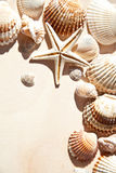 Sea shells and star Stock Image