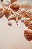 Sea shells and star Stock Photography