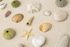 Sea shells and star fish Royalty Free Stock Photos