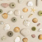 Sea shells and star fish Royalty Free Stock Photography