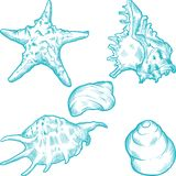 Sea shells and star. Hand drawn illustration Stock Image