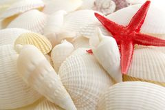 Sea shells and starfish Stock Photos