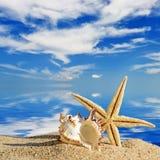 Sea shells and starfish on a beach sand Stock Image