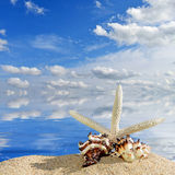 Sea shells and starfish on a beach sand Stock Images
