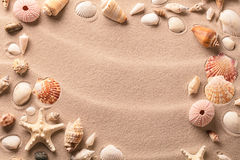 Sea shells and starfish on beach sand background royalty free stock photography