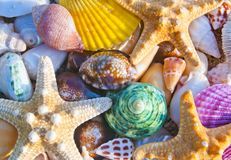 Sea shells and starfish beach Royalty Free Stock Image