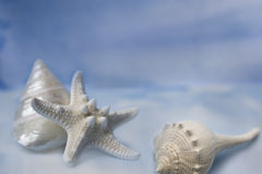 Sea shells & starfish on blue Stock Image