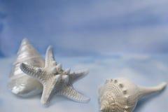 Sea shells & starfish on blue Stock Image