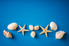 Sea shells with starfish. On blue background Stock Photos