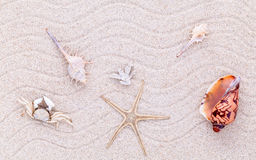 Sea shells,starfish and crab on beach sand for summer and beach Royalty Free Stock Image