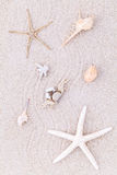 Sea shells,starfish and crab on beach sand for summer and beach Stock Photography