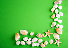 Sea shells with starfish. On green background Royalty Free Stock Photos
