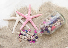 Sea shells and starfish on sand Royalty Free Stock Photos