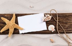 Sea shells and starfish. With sand, summer background Royalty Free Stock Photography