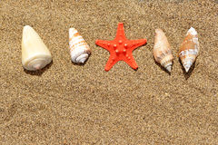 Sea shells with starfish on sand. Royalty Free Stock Photos