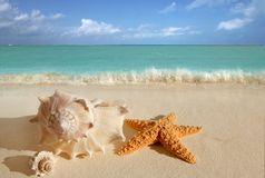 Sea shells starfish sand turquoise caribbean. Sea shells starfish on tropical sand turquoise caribbean summer vacation travel icon stock image