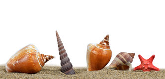Sea shells with starfish on the sand. On white background Royalty Free Stock Photo
