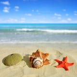 Sea shells with starfish Stock Photo