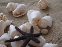 Sea shells and starfish sea Stock Images