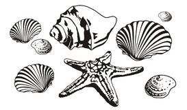 Sea shells and starfish silhouettes Royalty Free Stock Photo