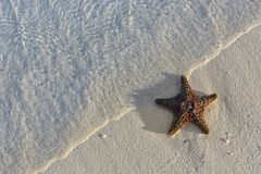 Sea shells starfish on tropical sand turquoise caribbean summer vacation travel icon royalty free stock photo