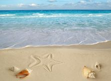 Sea Shells Starfish Tropical Turquoise Caribbean Royalty Free Stock Photos