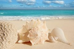 Sea shells starfish  turquoise caribbean Stock Photo