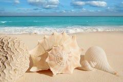 Sea shells starfish  turquoise caribbean. Sea shells starfish on tropical sand turquoise caribbean summer vacation travel icon Stock Photo