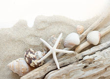Sea shells, starfish and wood - Tropical travel Royalty Free Stock Photography