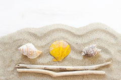 Sea shells, starfish and wood - Tropical travel Stock Photo