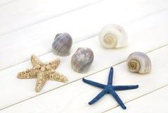 Sea shells and starfish Royalty Free Stock Photos