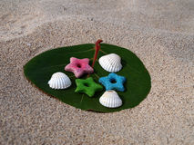 Sea Shells and Stars on Sea Grape Leaf Stock Images