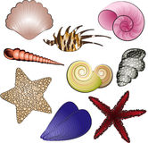 Sea Shells and Stars Royalty Free Stock Photos