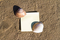 Sea Shells and Sticky Post. Sea shells with blank, yellow stick post on sandy beach Stock Photography