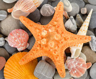 Sea shells and stone Stock Images