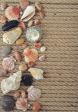 Sea shells and stones Stock Photography