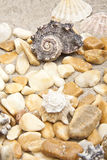 Sea shells and stones Stock Image
