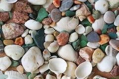 Sea shells and stones Royalty Free Stock Photos